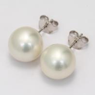 Abilene South Sea White Pearl Stud Earrings